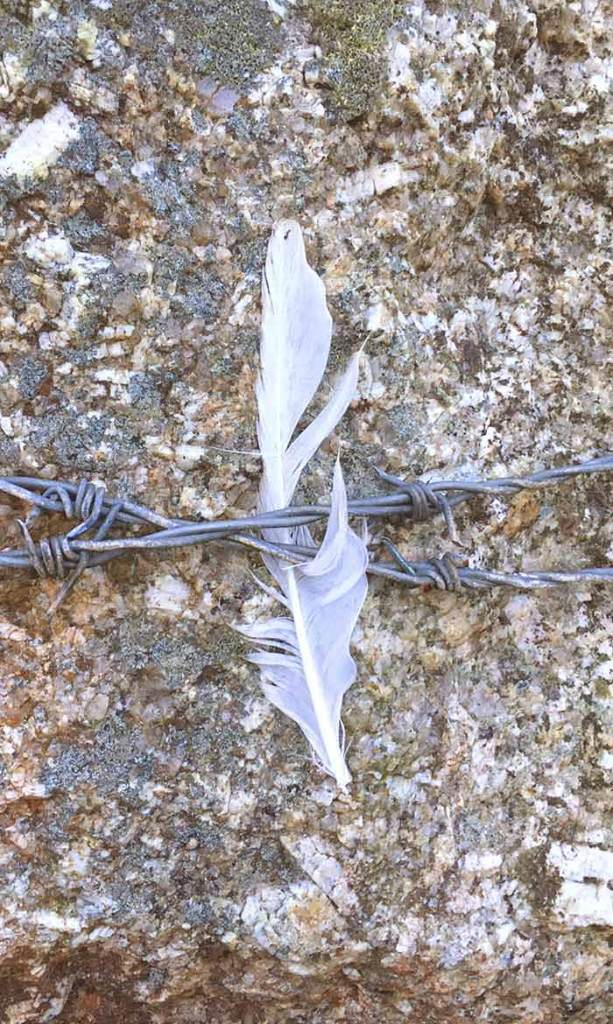 White Feather Signal by Victoria Burton-Davey