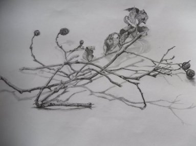 Sketchbook - graphite - twigs and cones
