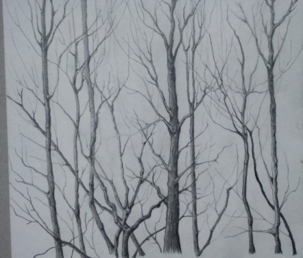 Graphite winter trees for watercolour sketchbook