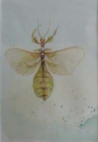 Leaf insect - watercolour and watercolour pencil