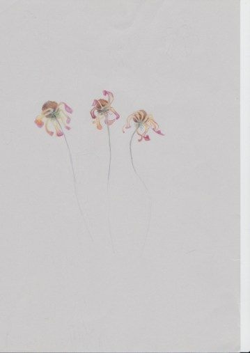 Sketchbook - wax pencil - dried flowers