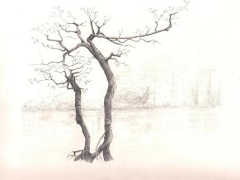 Water Tree - graphite
