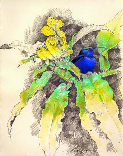 Blues on Yellow, Red-legged Honeycreeper