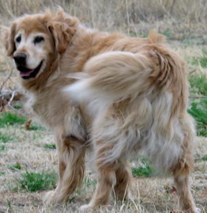 Cody-July 23,1993-April 4, 2008