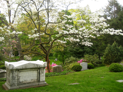 Eternal peace, and all those warblers. Mt. Auburn Cemetary, Boston.