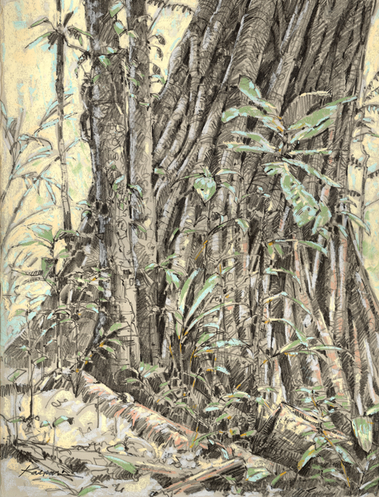 Strangler fig, Peru. Graphite and pastel on Rives BFK, drawn plein air in the Amazon rainforest, Peru.