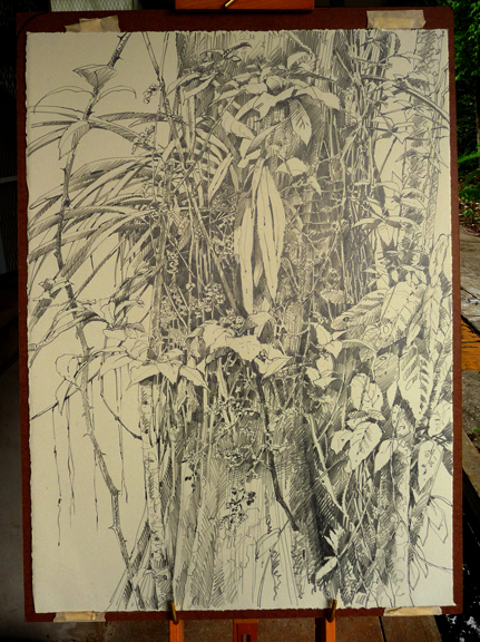 """Drawing of a lovely orchid with long sprays of tiny yellow flowers. 18"""" x 24"""" on Rives BFK paper."""