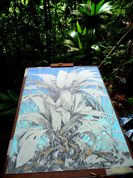 Today's drawing, plein air in the jungle.