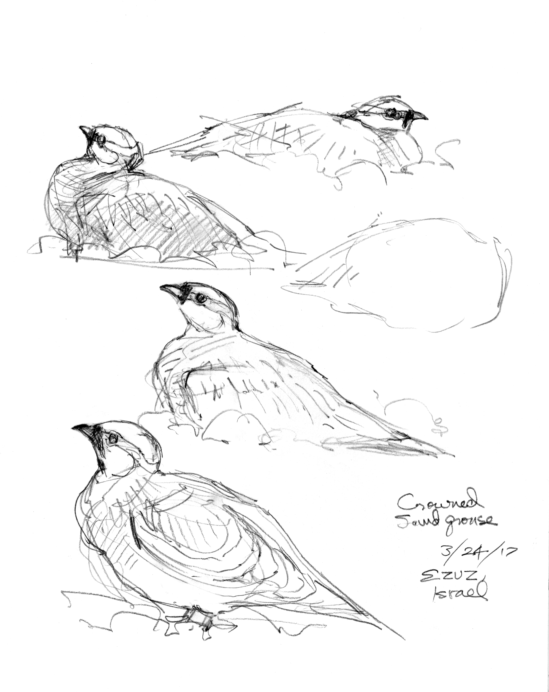 The Dead Sea Project Drawing The Motmot