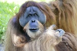 les orangs-outans savent ils Dans Quoi Investir Pour Gagner De L'Argent ?