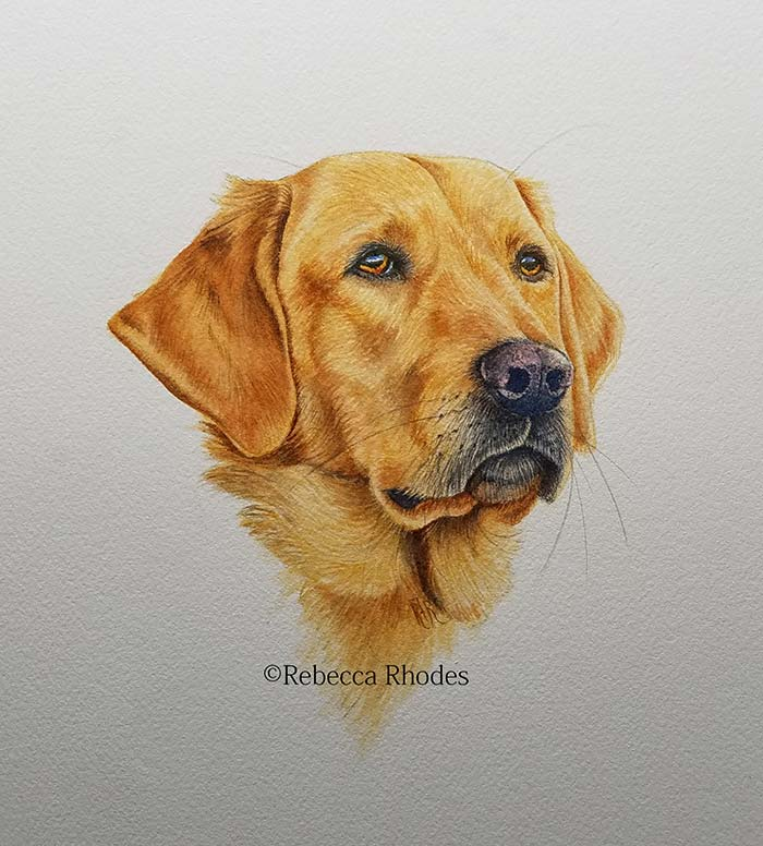 How to paint a golden retriever