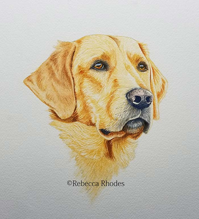 how to draw a golden retriever realistic dogs