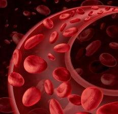 Red Blood Cells Circulation