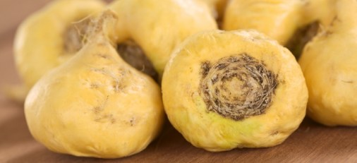 Image result for MACA