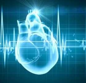 human heart with cardiogram