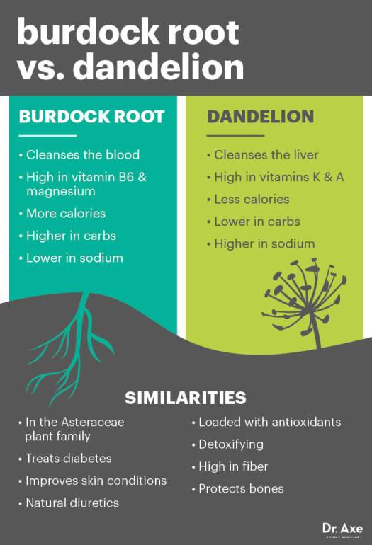 Burdock root vs. dandelion - Dr. Axe