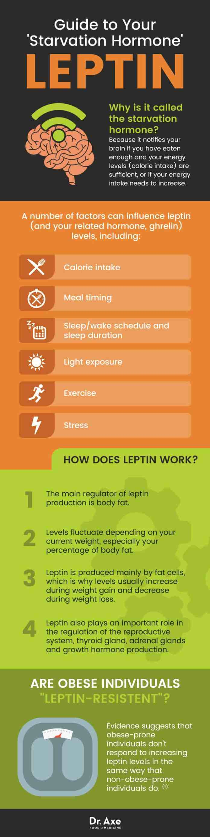 Leptin guide - Dr. Axe