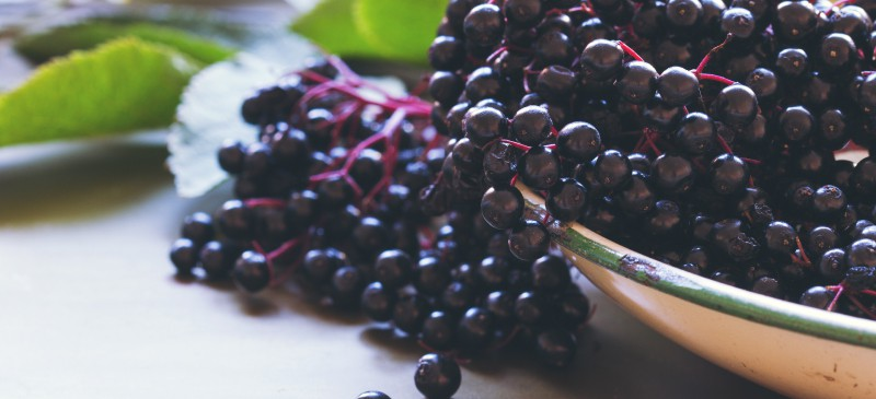 Elderberry Benefits Dosage Side Effects And Interactions Dr Axe