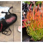 Two Dogs Nearly Died After Being Exposed To Toxic Plant Familypet