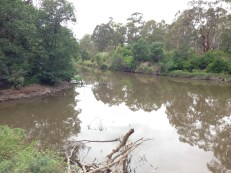 Mouth of Diamond Creek into the Yarra.