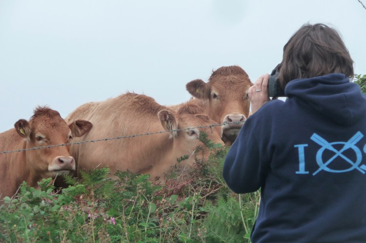 Focussing on Cows