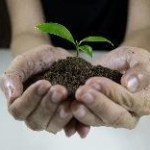 a small green sprout is growing out of dirt held in the palms of a person's hands.