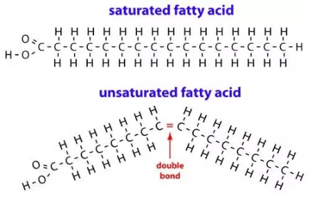 The difference between saturated fatty acids and unsaturated fatty acids. These fats are distinguished by the presence of a double bond.