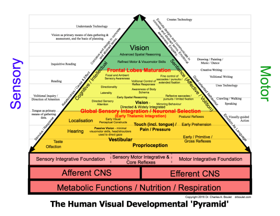 developmental pyramid