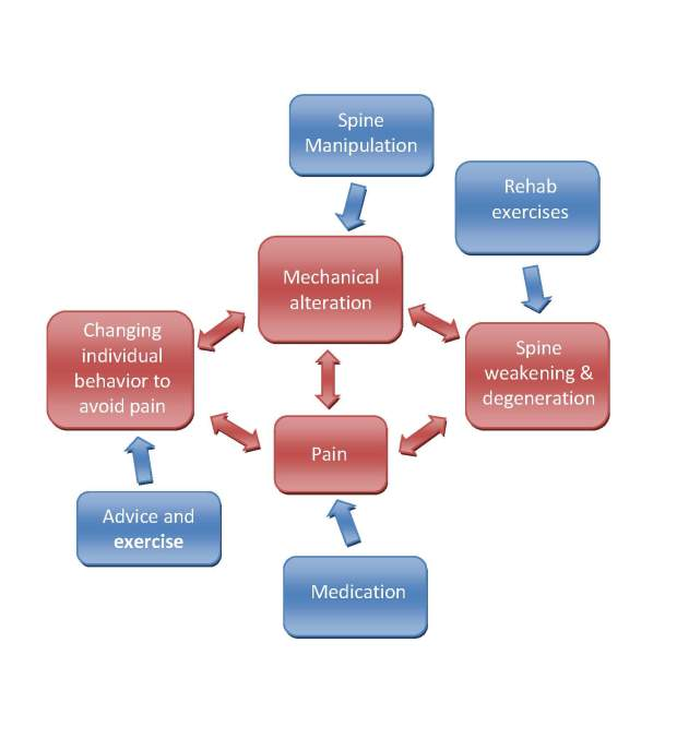 Focus of treatments and cycle of musculoskeletal dysfunction