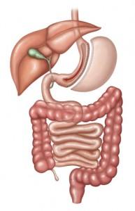 Gastrectomia vertical ou Sleeve Gástrico