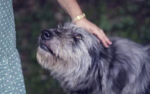 Home Alone: How to Deal with Separation Anxiety in Dogs by dr Claire Stevens
