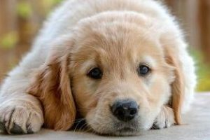 Best puppy pen
