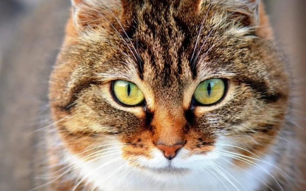 cat1-1080x675