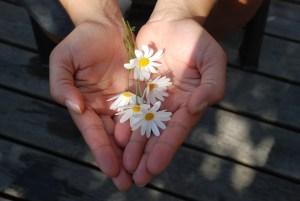flower-22656_960_720