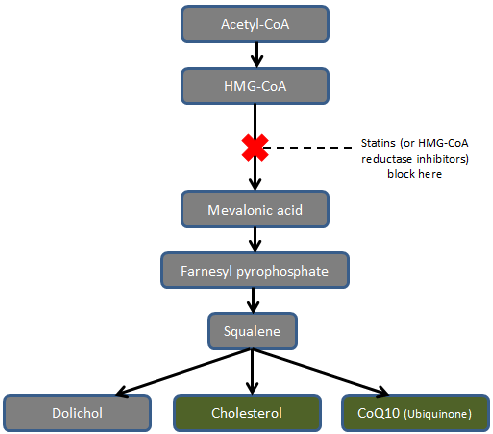 flow chart of acetyl-CoA being made into Cholesterol and CoQ10. A statin is shown to block the process, halting the production of both.