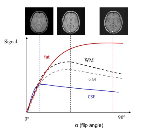 MRI signal curves for spoiled gradient echo.