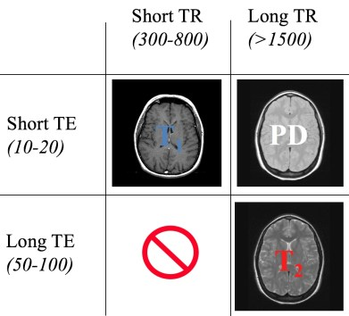 Spin echo contrast in MRI