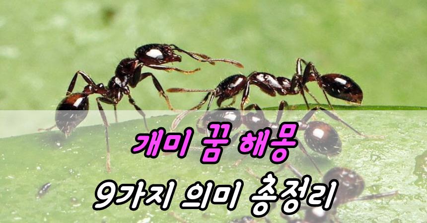 개미 꿈 해몽 9가지 의미 총정리