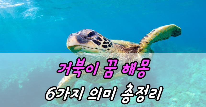 거북이 꿈 해몽 6가지 의미 총정리