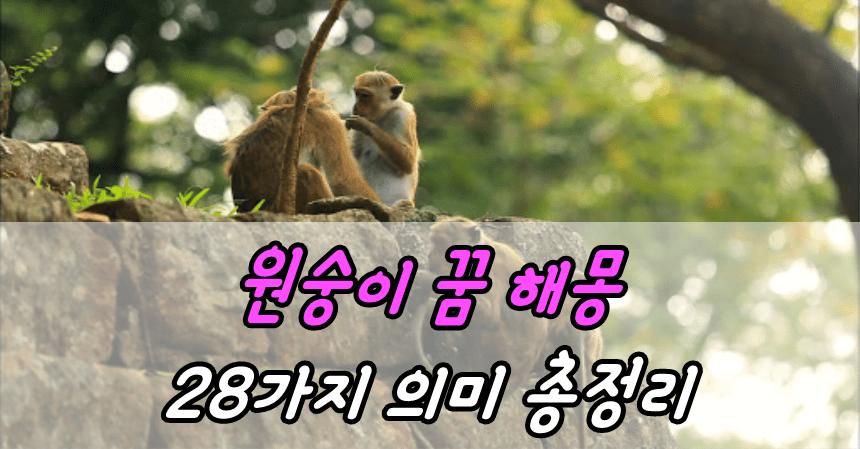 원숭이 꿈 해몽 28가지 의미 총정리