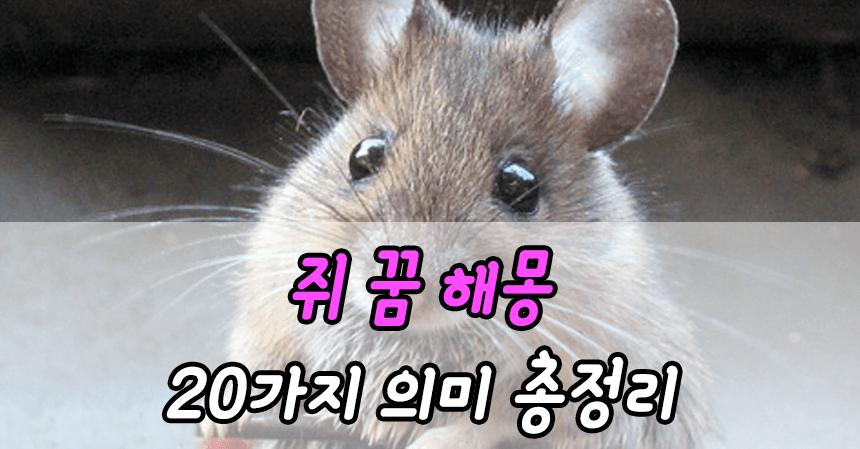 쥐 꿈 해몽 20가지 의미 총정리