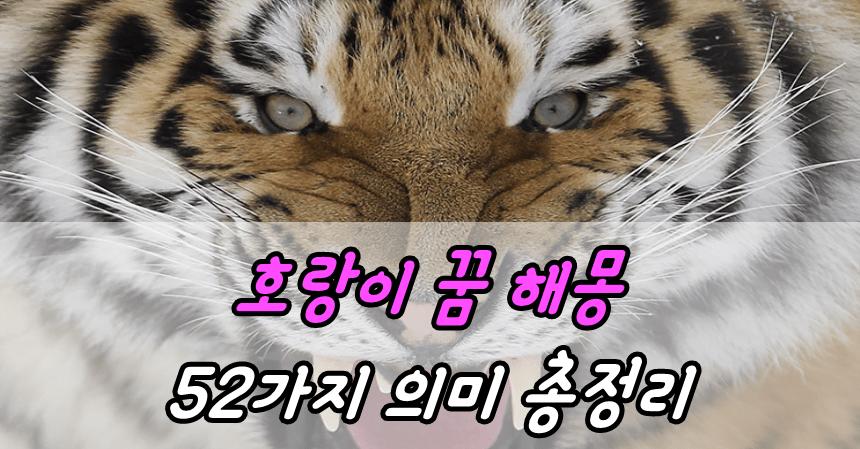 호랑이 꿈 해몽 52가지 의미 총정리