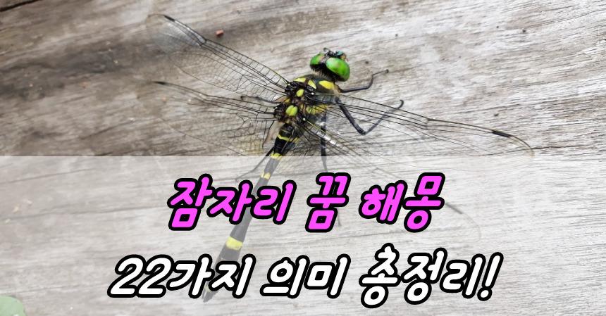 잠자리 꿈 해몽 22가지 의미 총정리!