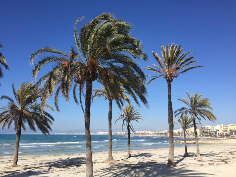 S'Arenal Mallorca Strand mit Palmen