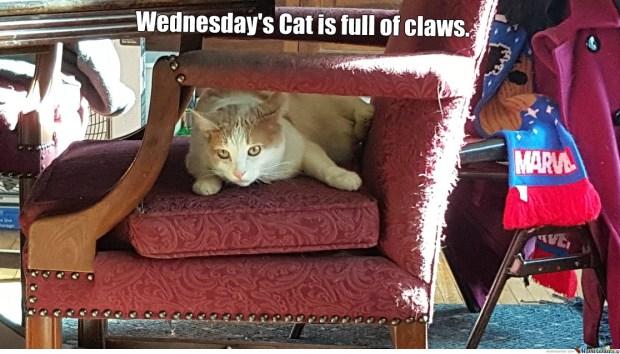 3. Wednesday's Cat