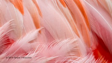 Flamingo Feather Patterns