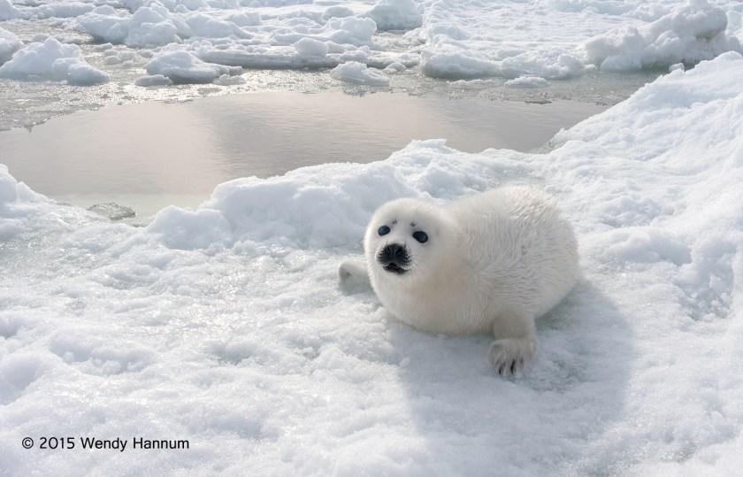 On Ice Flow c