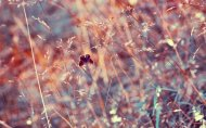 the_fleeting_kiss_of_summer___wallpaper_by_lindamarieanson-d4ja29c