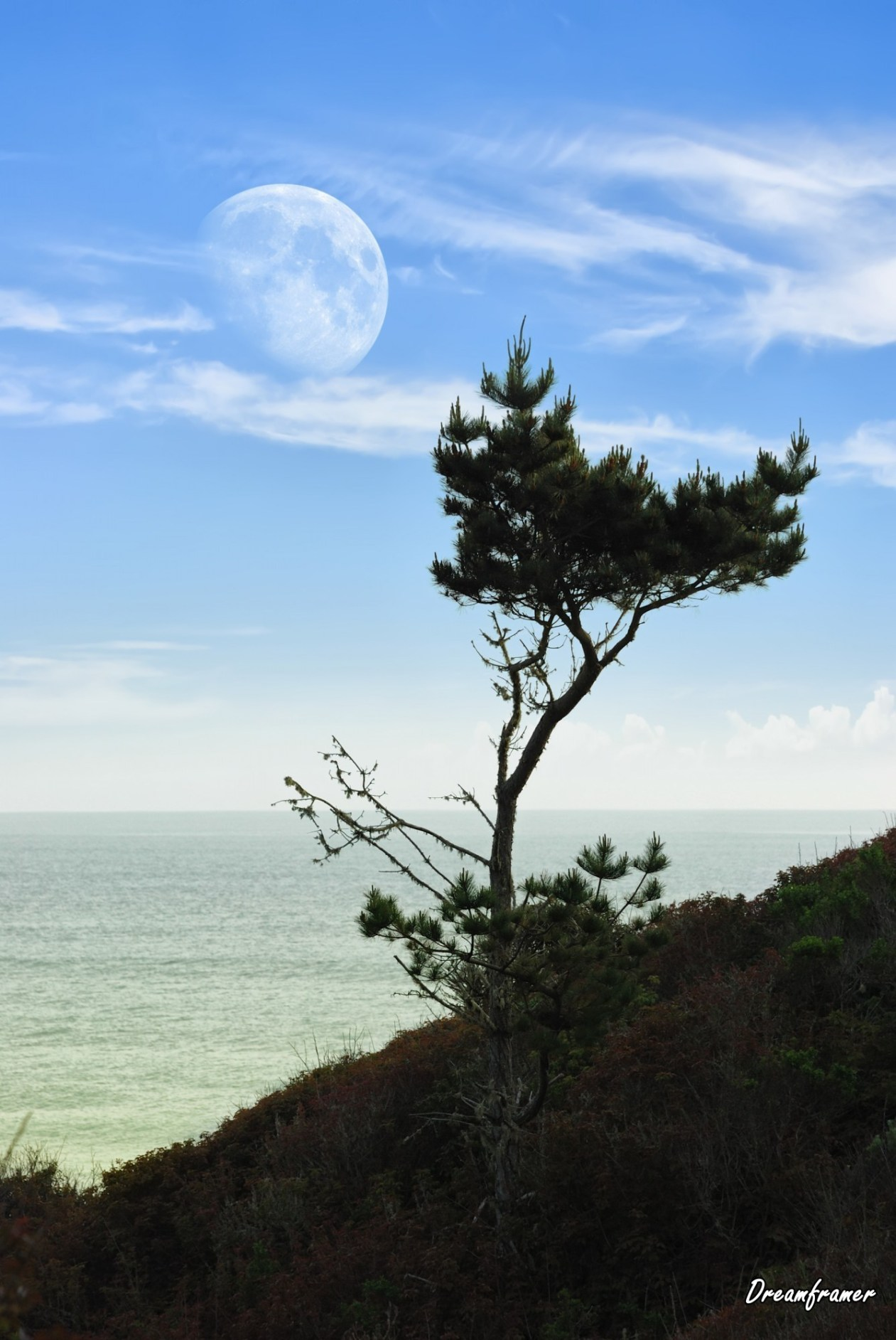 Moon and Pine - ©Dreamframer