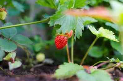 Organic food vs GMO